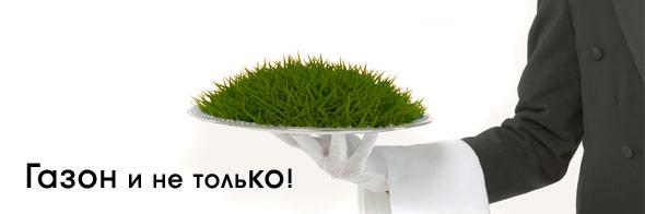 Рулонный газон. Укладка и сервис