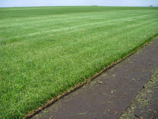 Рулонный газон срезают на поле