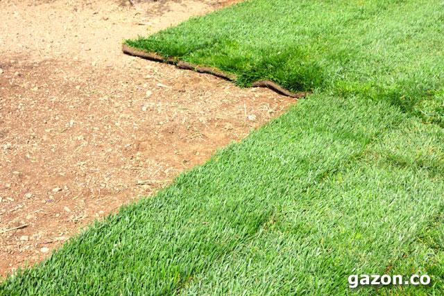 ландшафтный дизайн - укладка рулонного газона